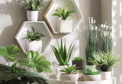 Rośliny w domu i ich wpływ na nasze samopoczucie