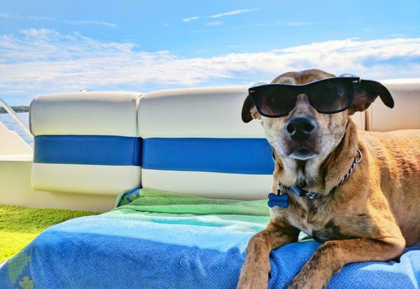 Wakacje z psem - zbiór praktycznych porad przed podróżą