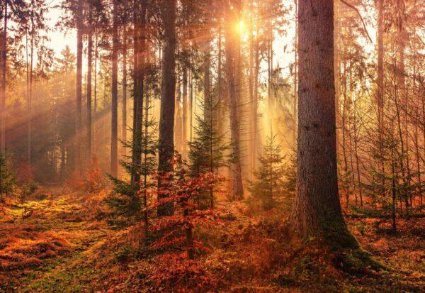 Co założyć na jesienny spacer po lesie?