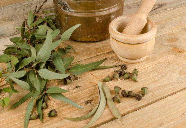 Olejek eukaliptusowy - jak działa?