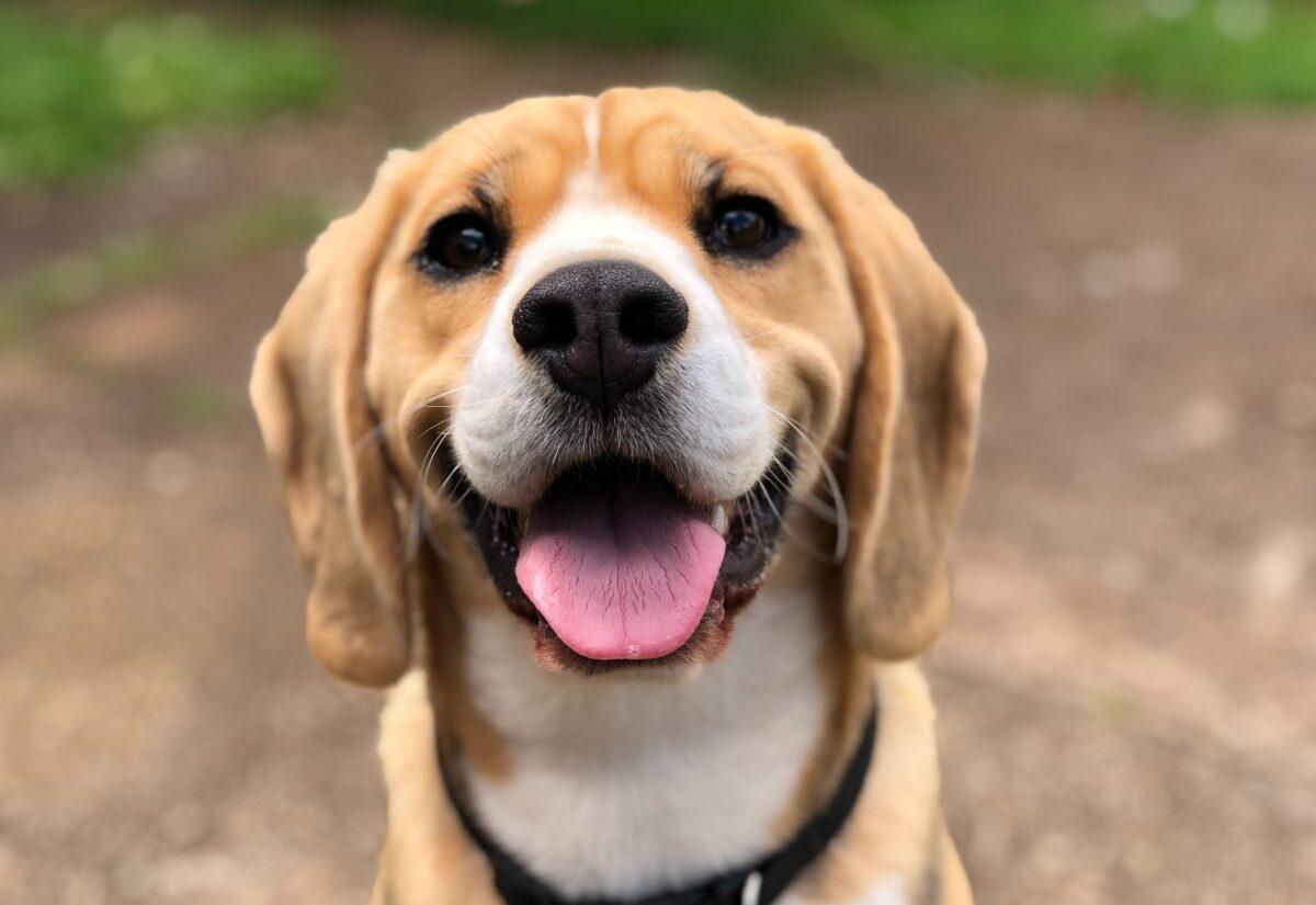 Czy warto kupować naturalne przysmaki dla psa?